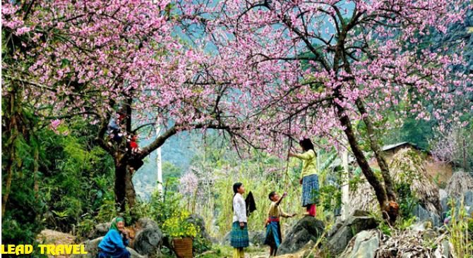 Kinh nghiệm Du lịch Mai Châu