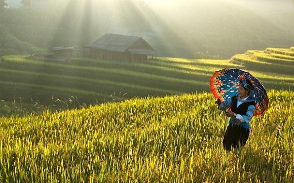 Đi du lịch Sapa mùa nào đẹp nhất? Tư vấn kinh nghiệm du lịch Sapa