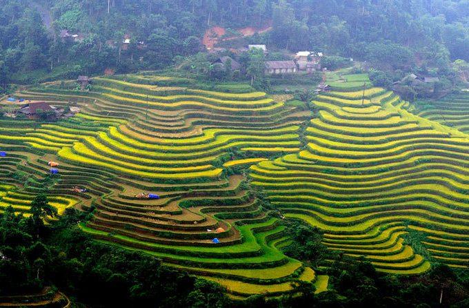 Ngắm Hoàng Su Phì cảnh đẹp tựa tranh khi đi du lịch Hà Giang