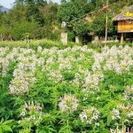 An-Lac-Resort-Vinh-Dong-Hoa-Binh