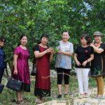 Vuon-buoi-Lang-Soi-in-Farm-Resort