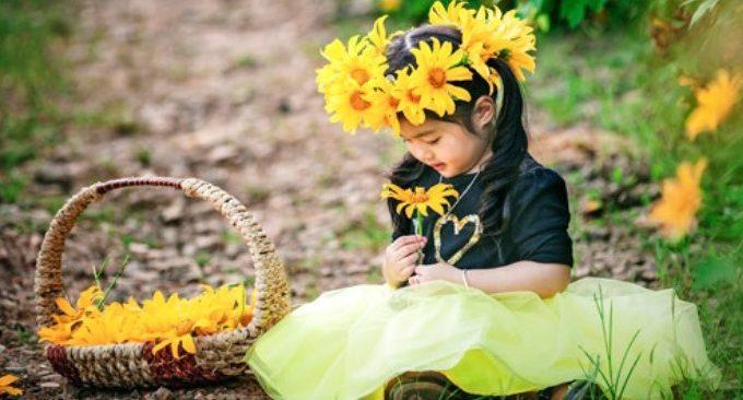 ngắm hoa dã quỳ ở Đà Lạt