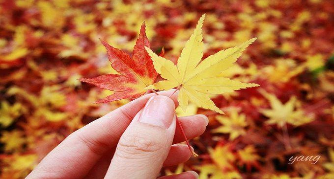 mùa thu Nhật Bản đẹp
