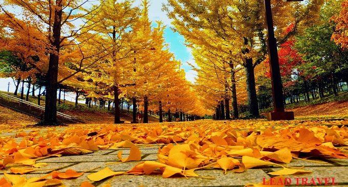mùa thu(2)