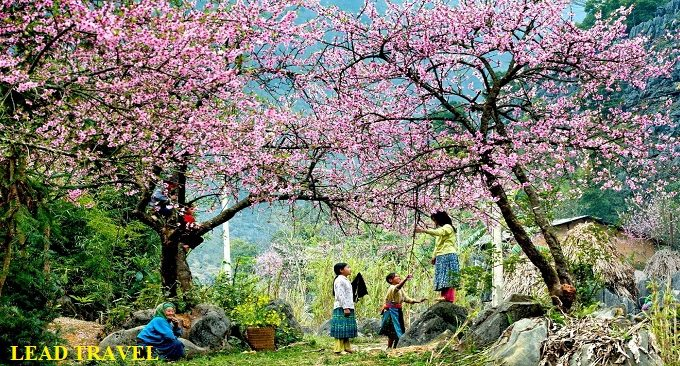 Hà Giang mùa xuân