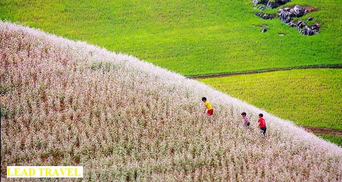du lịch Hà Giang tháng 10