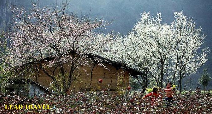 mùa xuân ở Phó Bảng