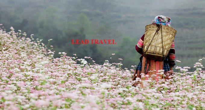 Kinh nghiệm đi Hà Giang ngắm hoa tam giác mạch