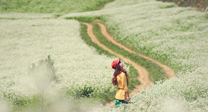 đồi thông Mộc Châu