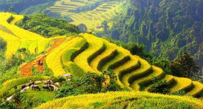 du lịch Mộc Châu từ tp HCM