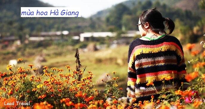 hoa Hà Giang