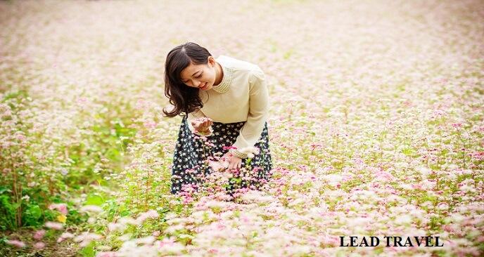 mùa hoa Hà Giang