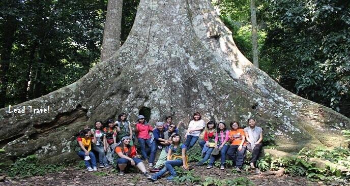 kinh nghiệm du lịch rừng Cúc Phương