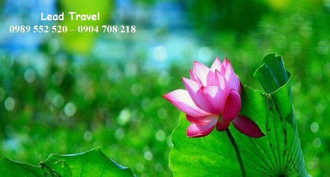 đi chùa Tam Chúc