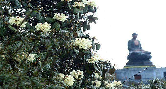 tham gia lễ hội hoa đỗ quyên Sapa