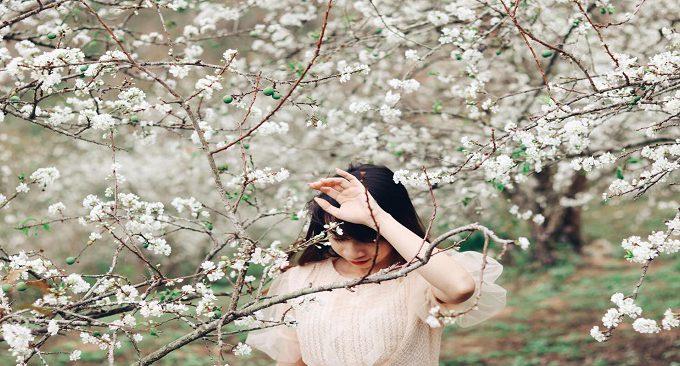 cảnh đẹp Mộc Châu mùa mận trắng