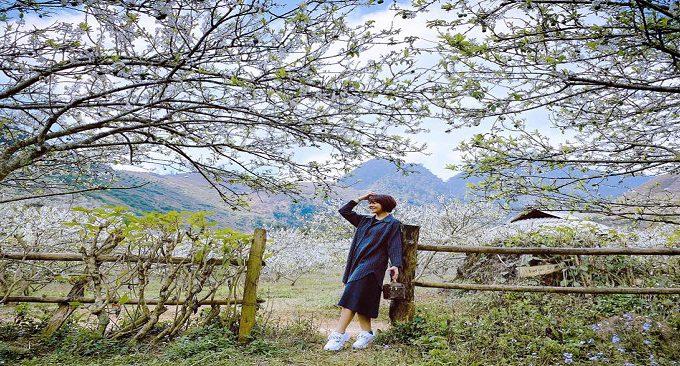 mùa hoa rừng Mộc Châu làm say lòng du khách