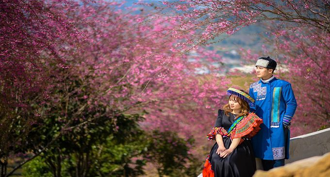 vườn hoa anh đào Mộc Châu ở Ba Đồi Chè