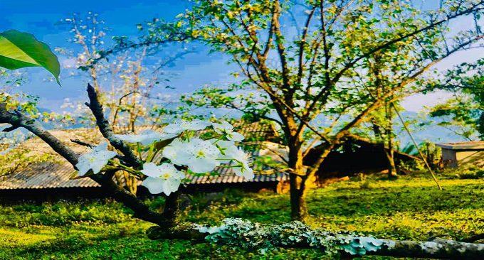 vẻ đẹp Tuyên Quang mùa hoa rừng