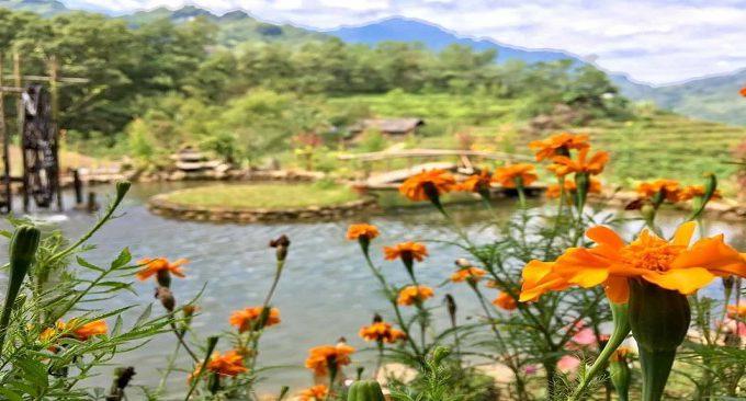 view vườn